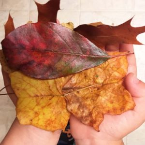 Exploring leaf shapes with a nature walk activity. Collect and sort leaves and compare and contrast their shapes