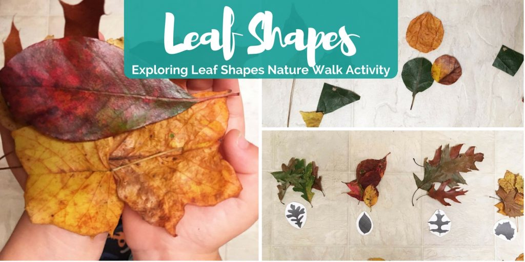 Exploring Leaf Shapes - Nature Walk Activity - Creative Little Explorers