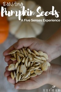 r\Roasting pumpkin seeds with kids is an activity that involves all five senses and this is a great way to learn all about them!