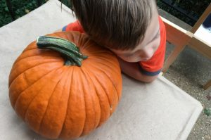 five senses activity roasting pumpkin seeds