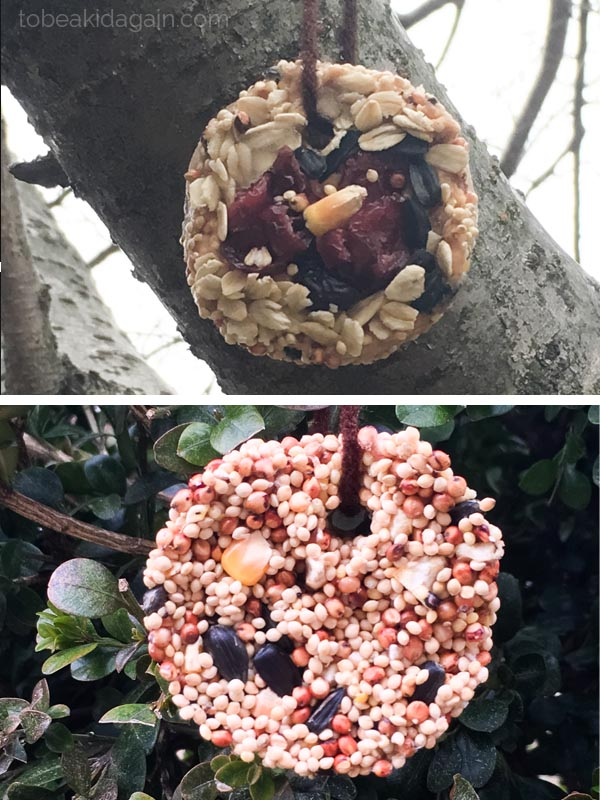 Birdseed Cookies DIY Winter Bird Feeder Pin
