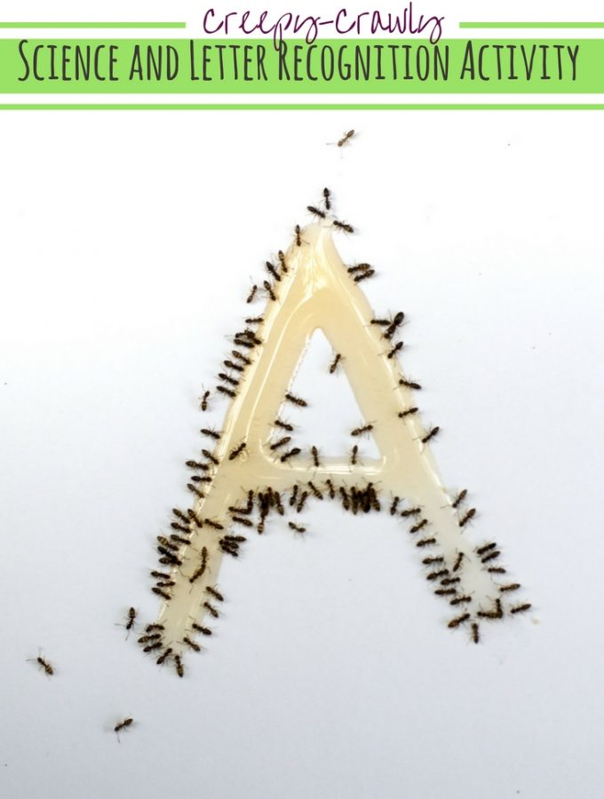 """A is for Ant"" Activity Kids Won't Forget!"