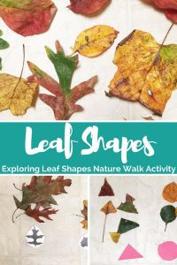 sorting leaf shapes activity and nature walk