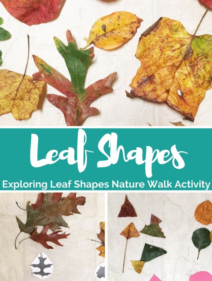 Exploring Leaf Shapes – Nature Walk Activity