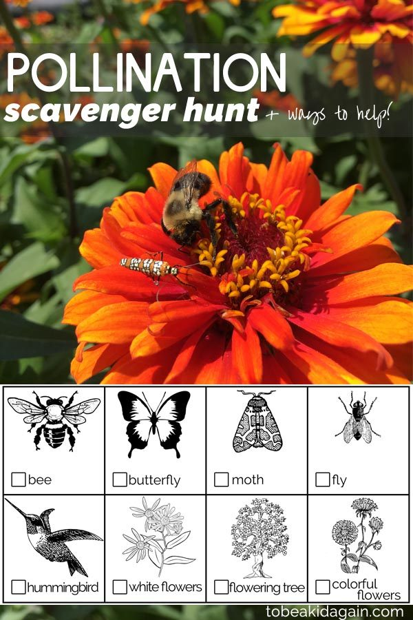 Learning About Bees and Other Pollinators: Scavenger Hunt + Ways to Help